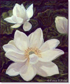 Lotus Study